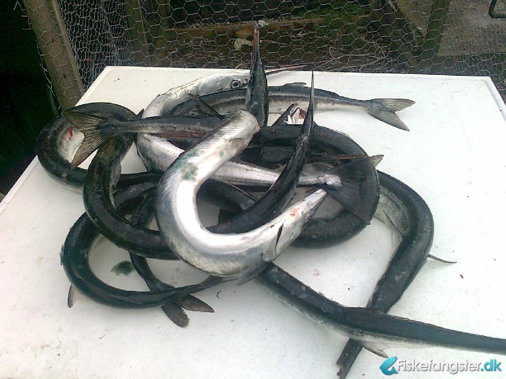 Gå til -> http://www.fiskefangster.dk/billeder/forum/fiskefangsterDK__218CjcGBb2xl4.jpg